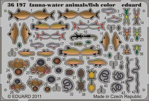 Fauna - water animals/fish - colour