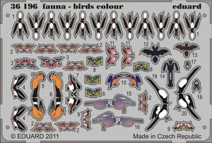 Fauna - birds - colour